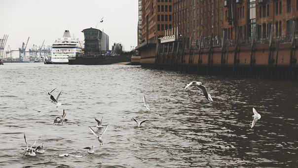 Hamburg, Gulls, Port, Cranes, Ship, Harbour City