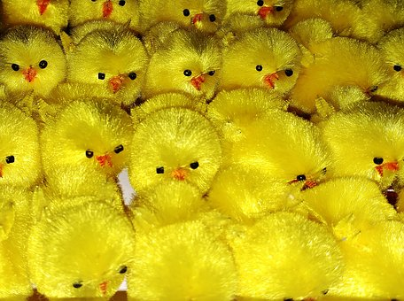 Color, Chicks, Easter, Easter Monday, Yellow, Small