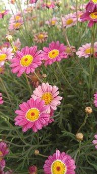 Nature, Summer, Flower, Flora, Garden