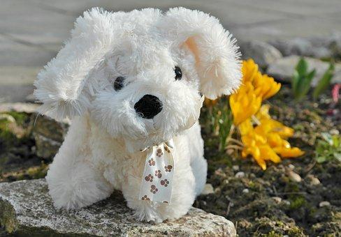 Dog, Toys, Toy Dog, Play Kid Animal, Cute, Mammal