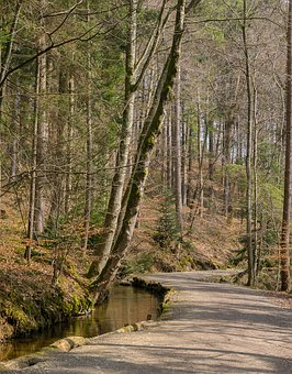 Tree, Wood, Nature, Forest Path, Road