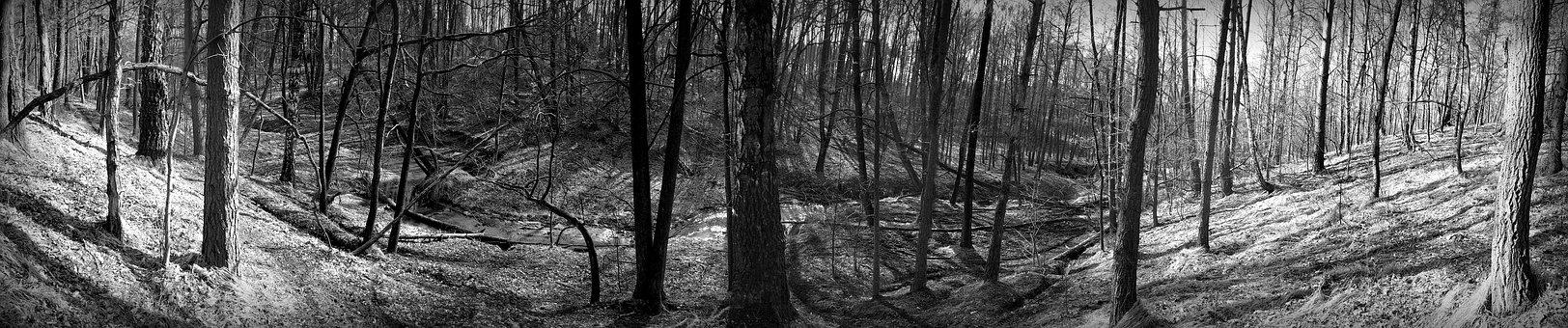 Nature, Panoramic, Tree, Old, No One, Forest, Spring