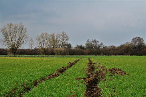 Spring, Troubled Way, Grass, Nature, Landscape