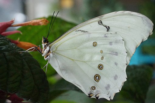 Butterfly, Nature, Insect, Outdoors, Wing, Macroscopic