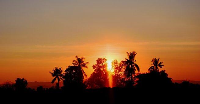 Sunset, Black Shadow, Sun, Evening, Cornfield