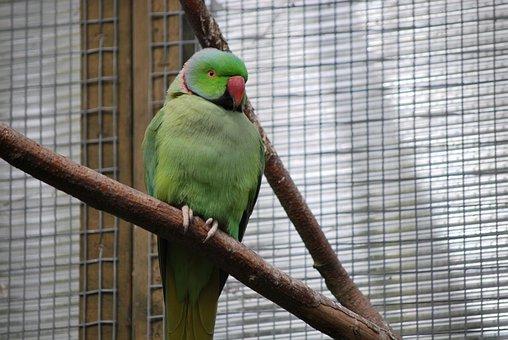 Bird, Feather, Nature, Parrot, Animal, Wildlife