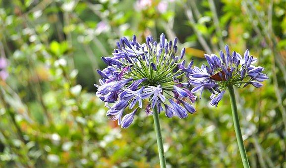 Nature, Flora, Summer, Flower, Outdoors, Garden, Field