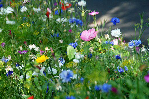 Nature, Plant, Summer, Field, Herbs, Flowers
