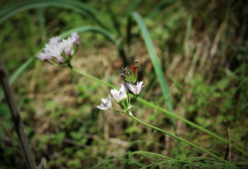 Nature, Flower, Outdoors, Flora, Grass, Wildflower