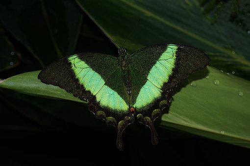 Insect, Butterfly, Invertebrate, Nature, Green