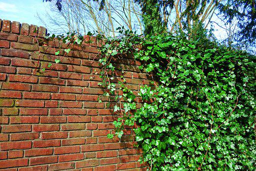 Brick Wall, Wall, Ivy, Creeper, Vine, Red Brick Wall