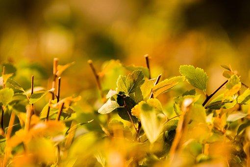 Nature, Leaf, Plant, Summer, Growth, Leaves, Sun, Hedge