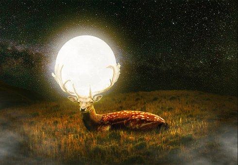 Nature, Moon, Light, Wildlife, Dark, Deer, Animal