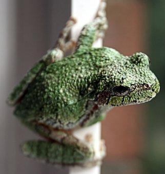 Reptile, Lizard, Nature, Animal, Wildlife, Amphibian