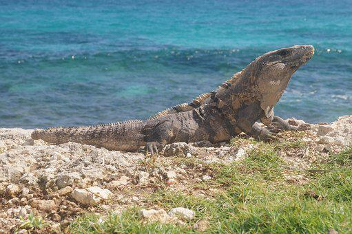 Sea, Nature, Body Of Water, Ocean, Beach, Costa, Summer
