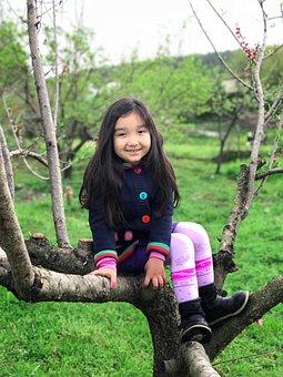 Nature, Tree, Outdoor, Park, Wood-fibre Boards