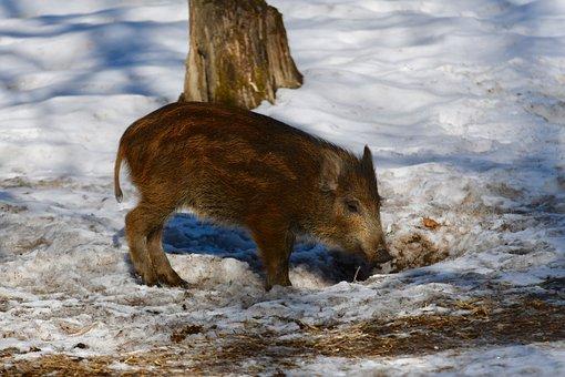 Snow, Nature, Mammal, Winter, Outdoor, No Person