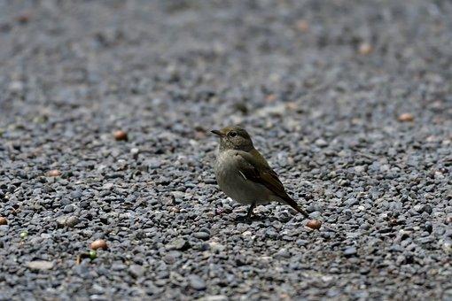 Natural, Bird, Wild Animals, Young, Outdoors