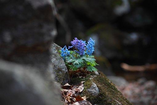 Nature, Outdoors, Plants, Leaf, Flowers, Hyun Ho-color