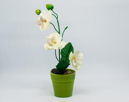Growth, Flower, Vase, Plant, Nature, Flowerpot, Bud