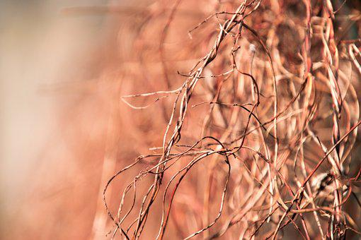 Nature, Background, Dry, Hedge, Scrub, Plant, Branch