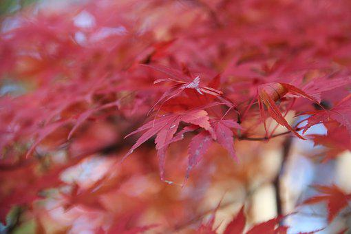 Nature, Leaf, Season, Flora, Fall, Color, Closeup