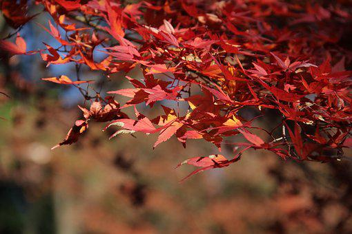 Leaf, Fall, Season, Tree, Nature, Flora, Outdoors