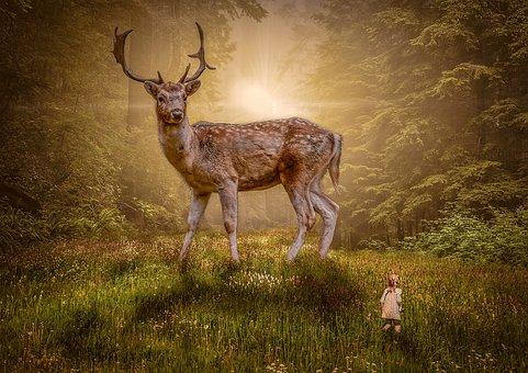 Deer, Mammal, Nature, Wildlife, Stag, Grass, Animal