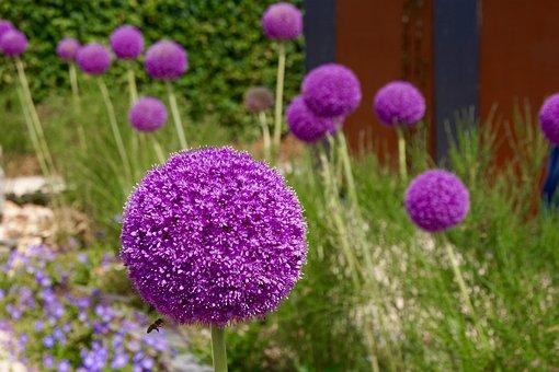 Nature, Flower, Summer, Plant, Color, Field, Garden