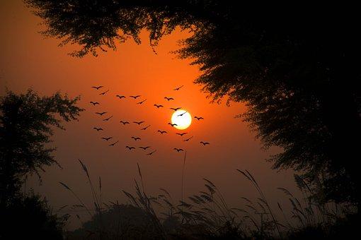 Sunset, Sun, Dusk, Dawn, Silhouette, Village Sunset
