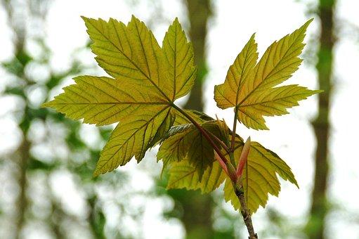 Sheet, Nature, Lively, Veins, Sun, Translucent, Green