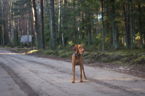 Road, Wood, Outdoors, Tree, Nature, Dog, Animal, Cute