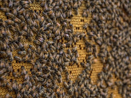 Beehive, Bee, Honeycomb, Beekeeping, Wax, Insect