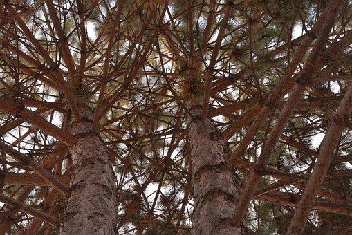 Tree, Wood, Branch, No One, Evergreen, Coniferous Tree
