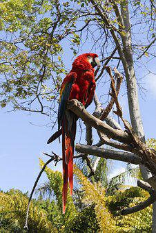 Nature, Tree, Bird, Tropical, Wood, Parrot, Wild