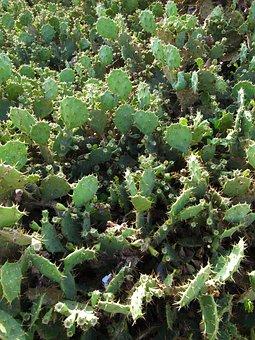 Plant, Leaf, Nature, Succulent Plants, Cactus, Food