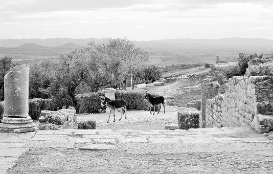 Black And White, Romans, Donkeys, Roman, Archaeology