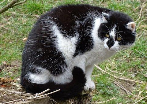 Cat, Domestic Cat, Pet, Hide Nose, Cat Face