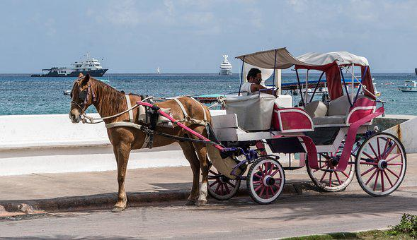 Horse, Seaside, Ocean View, Caribbean, Cart