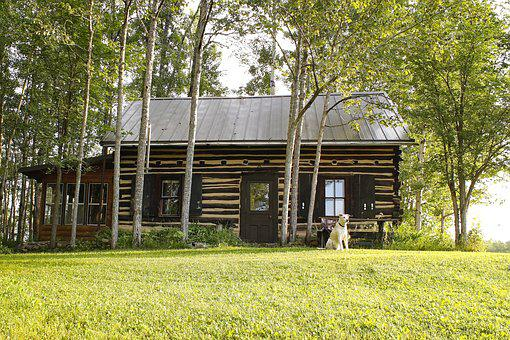 Log Cabin, Woods, Lawn, Lifestyle, Architecture, Sunny