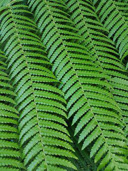 Leaf, Nature, Fern, Growth, Flora, Lush, Outdoors
