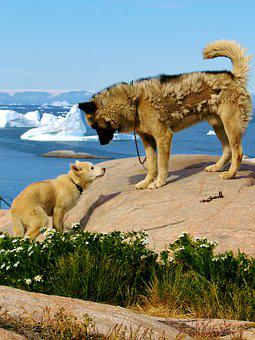 Natural, Expensive, Outdoor, Travel, Summer, Greenland