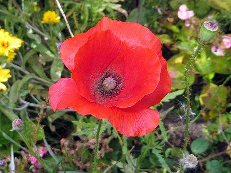 Flower, Plant, Nature, Summer, Garden, Field, Floral