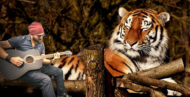 Nature, Wild Life, Animalia, Portrait, Guitarrist