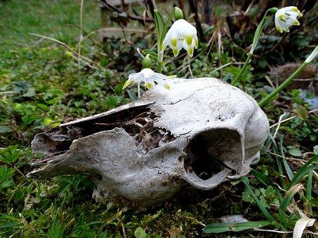 Nature, Wild, Skull, Wild Animal, Rehschädel