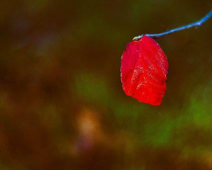 Nature, Flower, Leaf, Outdoors, Red, Colour, Color