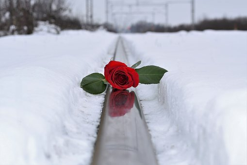 Red Rose In Snow, Love Symbol, Lost Love, Railway