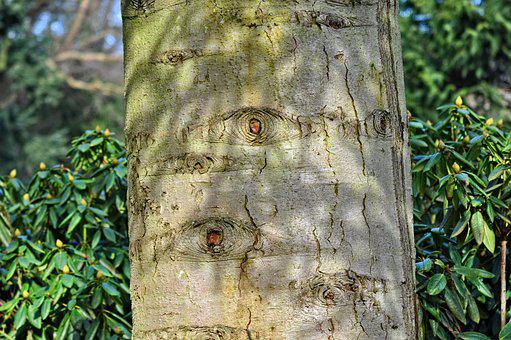 Tree, Trunk, Tree Trunk, Bark, Scar, Scarred Bark, Eye