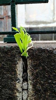 Soil, Plant, Leaf, Ontogeny, Nature, Grass, Tuft, Green