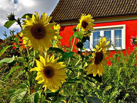 Flower, Summer, Nature, Flora, Field, Sunflowers